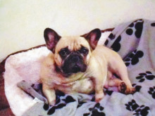 Dog stolen in planned attack by knife robber