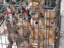 Owner banned after 15 dogs found in sickening conditions