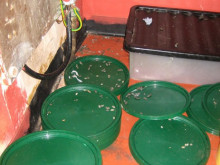 Rat droppings found at food business