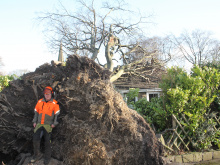 Uprooted tree smashes through roof in high winds
